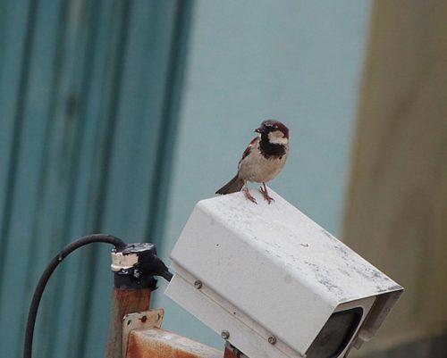 Vigilancia. Foto: Luis Carlos Fernandes/ Flickr