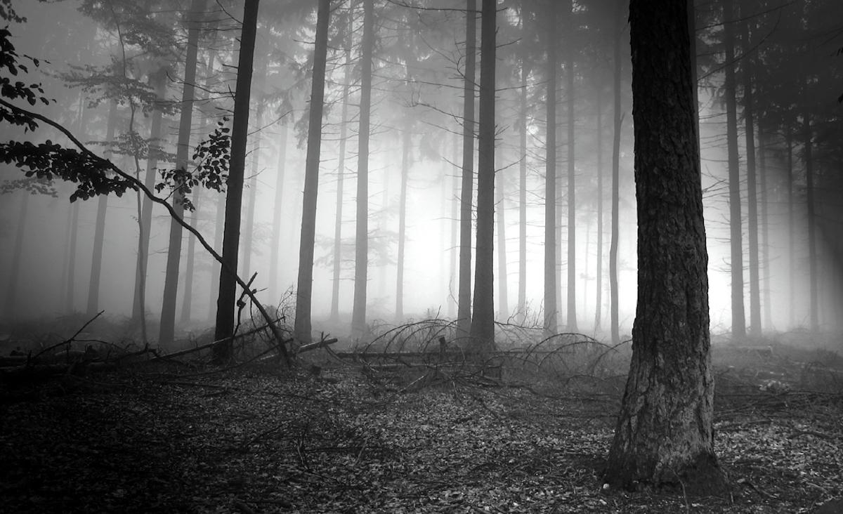 La Teoria De Los Bosques Oscuros De Internet Cubaperiodistas